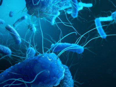 SANIDAD ANIMAL Y SALUD PÚBLICA: El paradigma de Salmonella.