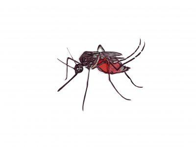 EL AUMENTO DE LAS TEMPERATURAS Y LA PROLIFERACIÓN DE LOS MOSQUITOS: Arbovirus y Parásitos transmitidos