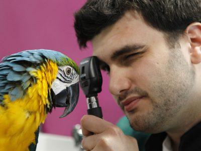 FERNANDO SARRATE (Veterinario)  – La salud del animal de compañía, una pieza importante en la salud global.